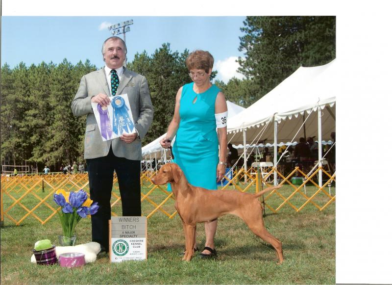 Winners Bitch at the Central New England Vizsla Club Specialty, Keene, NH